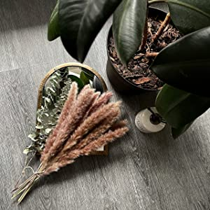 Natural Dried Pampas Grass 30 Piece and 3 Free Eucalyptus Stems for Home Decor. Amazing Decor for Home, Weddings, workspace. Romantic and Cozy ambience Decor for Your Home