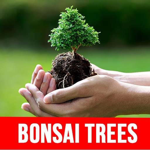 (Bonsai Trees)