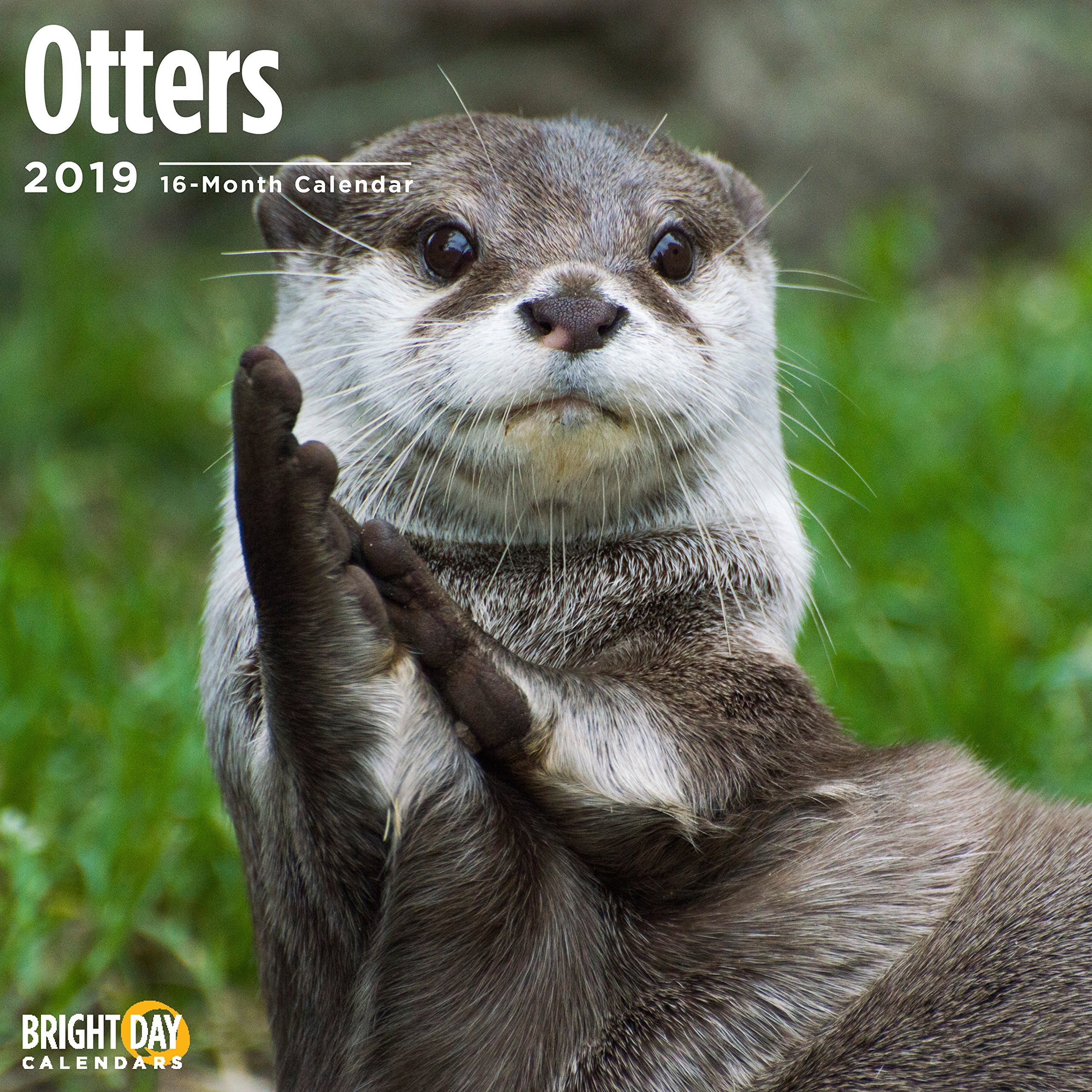 Otters 2019 Wall Calendar 12x12 Inches