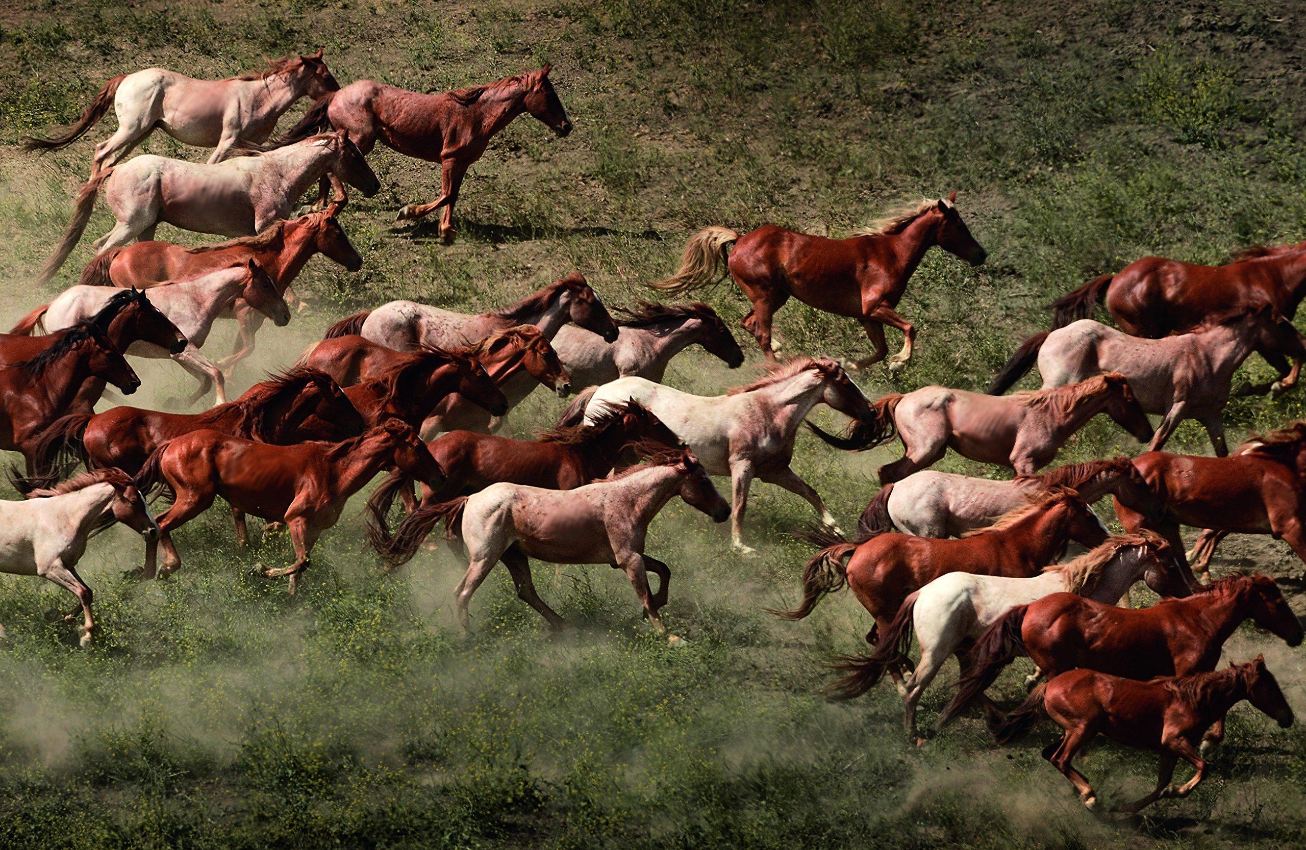 amazon com horses 9783832734268 tony stromberg books
