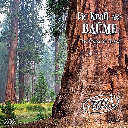 CALENDRIER 2021 ARBRE   FORET   NATURE   AVEC MAXI POSTER 30X60cm