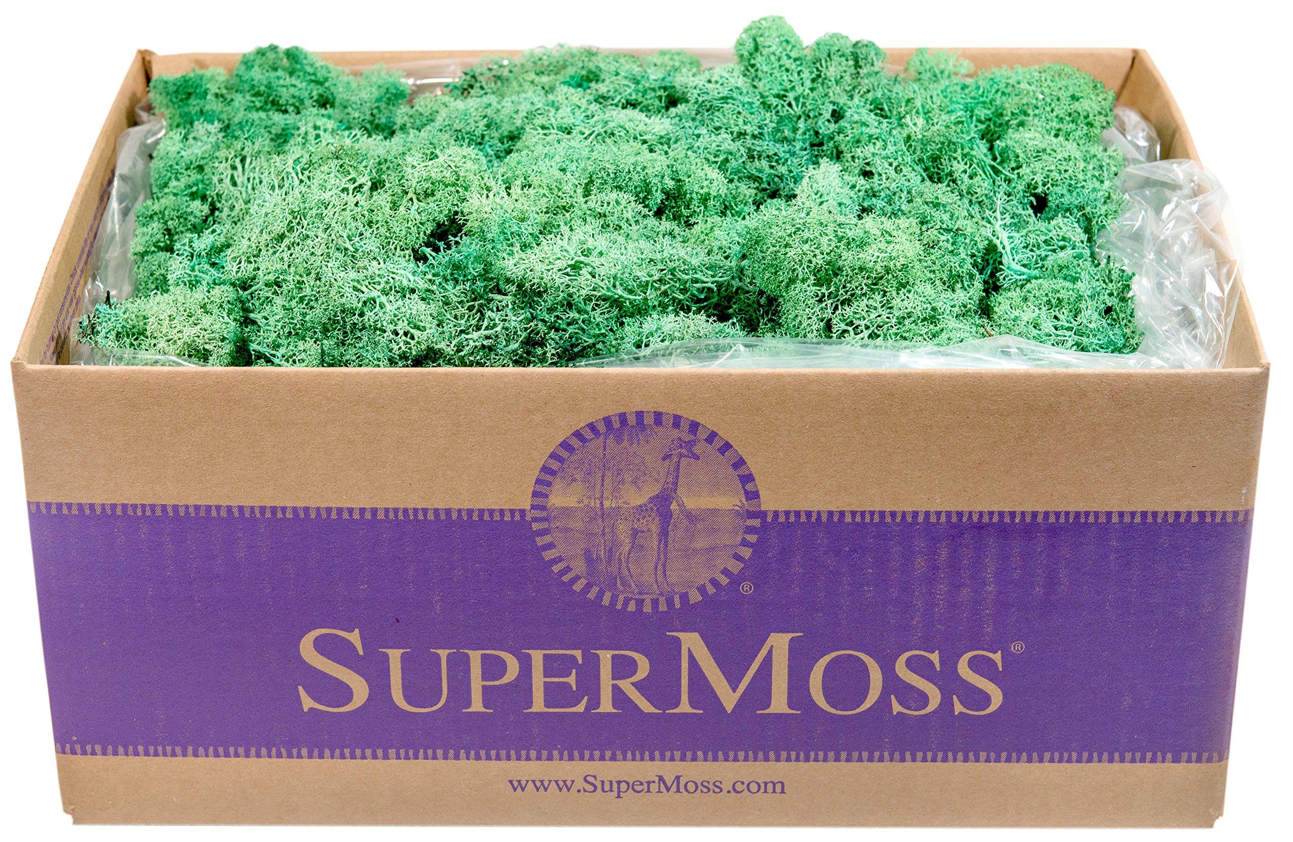 SuperMoss (23138) Reindeer Moss Preserved Box, 3) lb, Mint by Super Moss (Image #1)