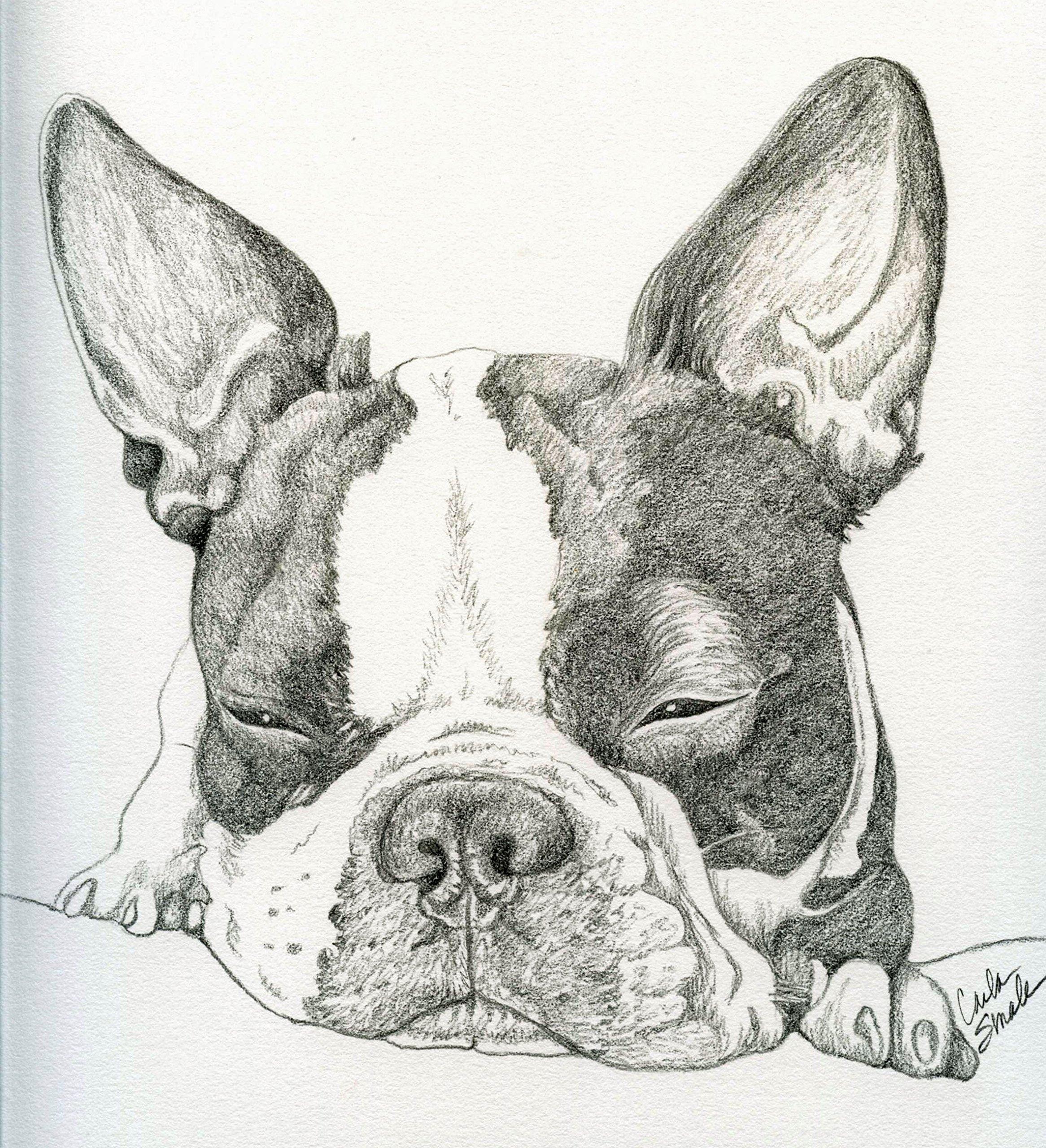 Custom Pet Portrait in Pencil-11 x 14-Carla Smale