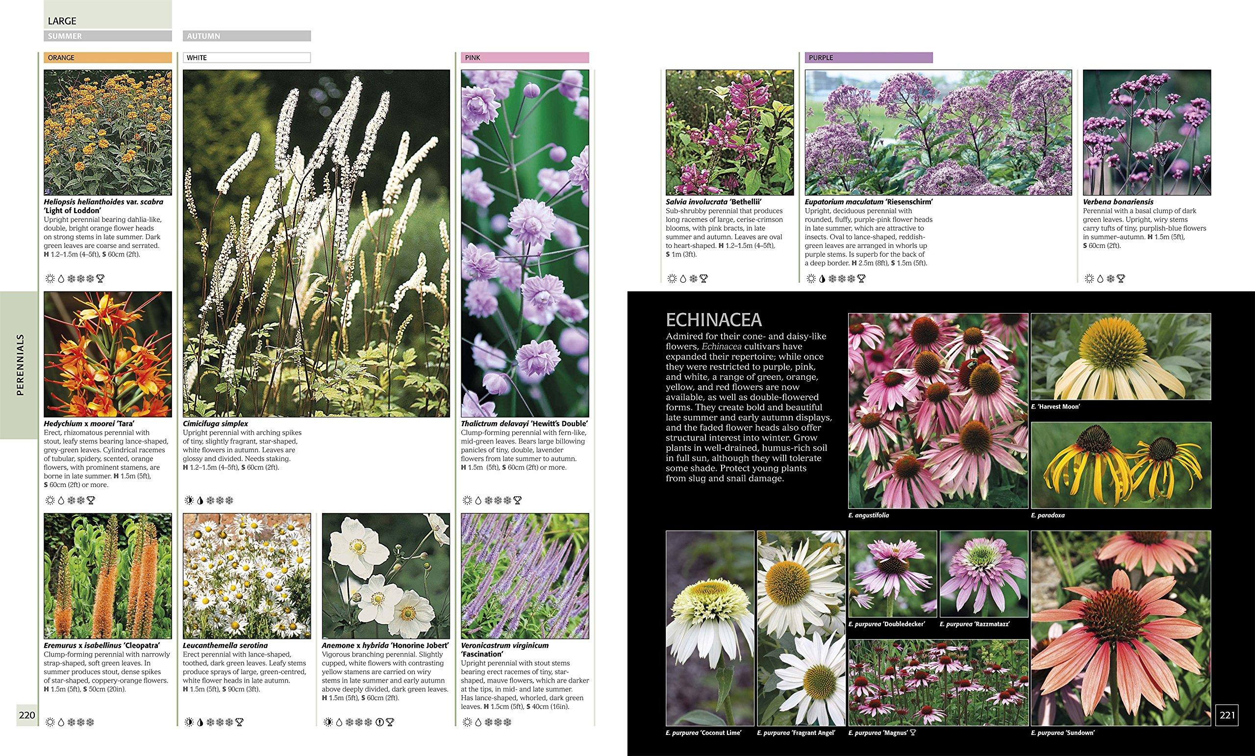 Harvest Moon Ds Salle De Bain ~ amazon fr rhs encyclopedia of plants and flowers christopher
