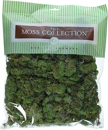 Pack of 2 Spring Green Quality Growers QG2060 Preserved Reindeer Moss 108.5 Cubic Inch