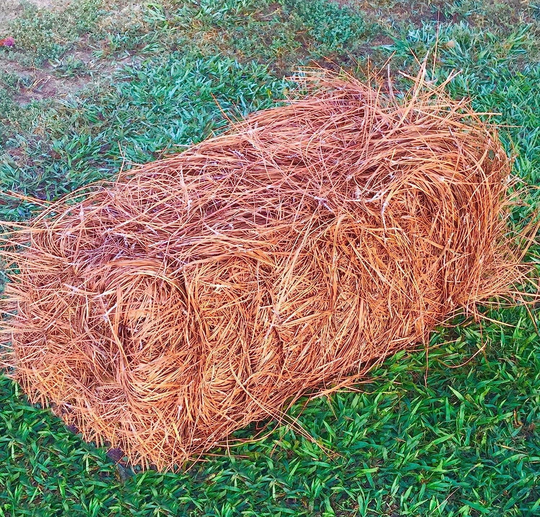 Amazon Com Usa Premium Pine Straw Pine Needle Mulch Covers 65 80 Sqft Garden Outdoor