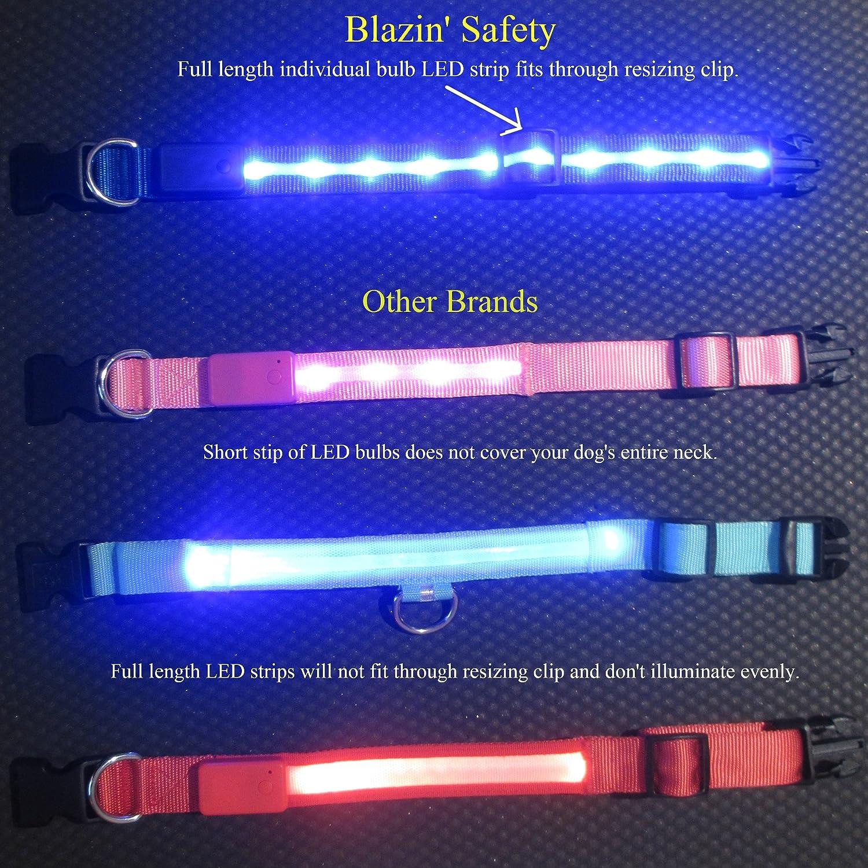 Blazin Bison Seguridad LED Collar de perro - USB recargable con luz violeta medio intermitente resistente al agua: Amazon.es: Productos para mascotas