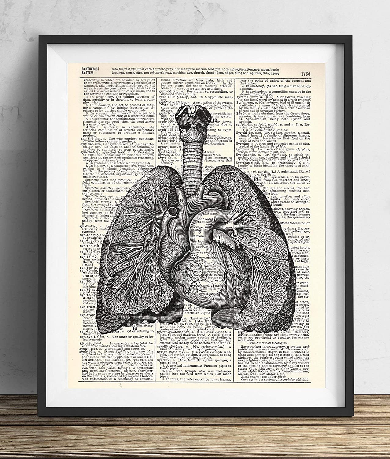 Amazon Heart And Lungs Anatomy Vintage Illustration Dictionary