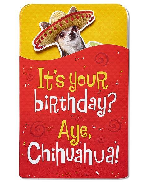 Amazon American Greetings Chihuahua Birthday Card With Music