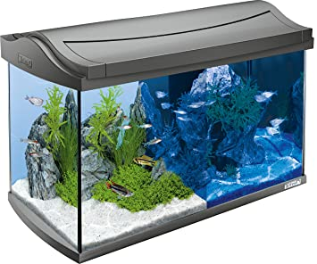 tetra aquaart aquarium komplett set tropisch 60 l. Black Bedroom Furniture Sets. Home Design Ideas