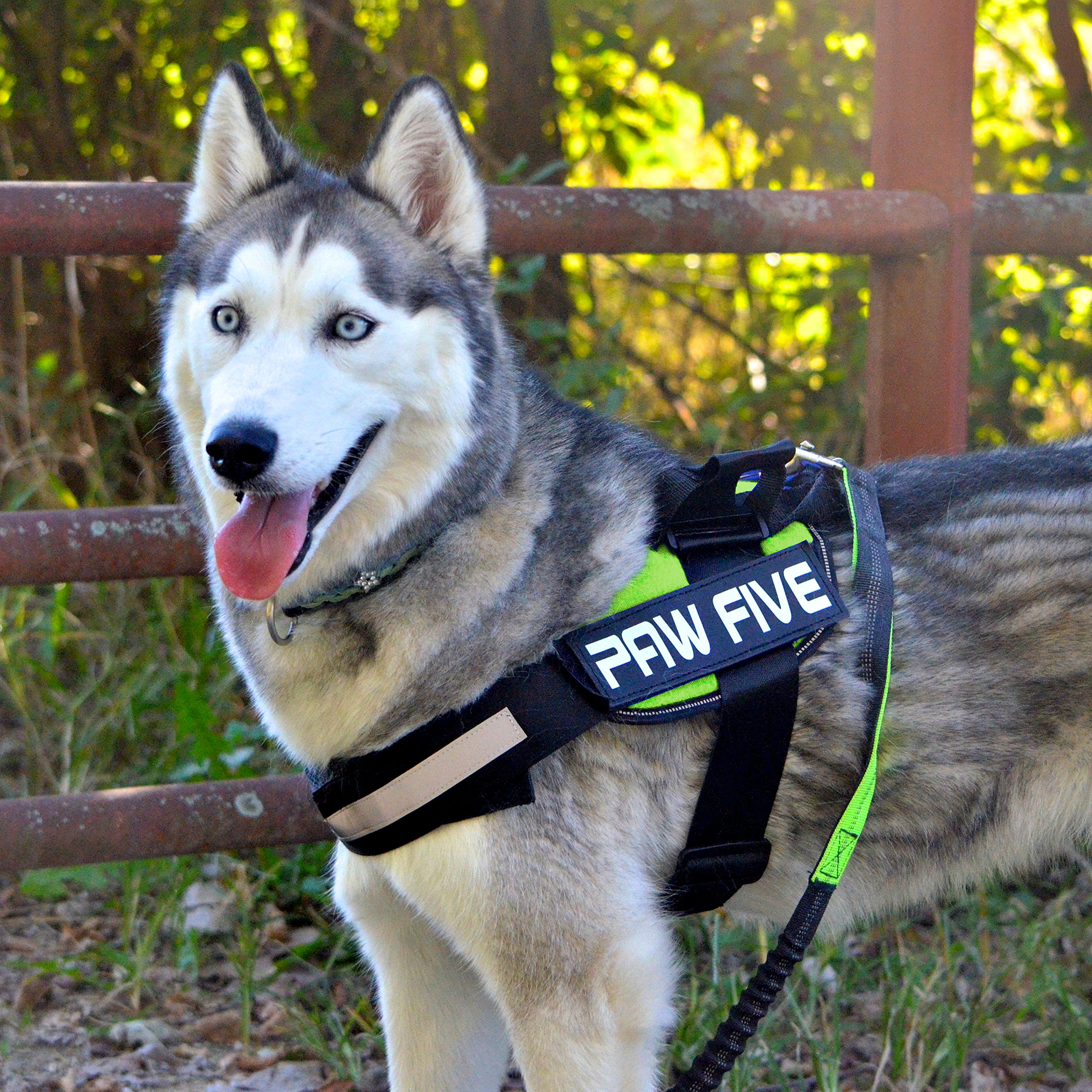 Paw Five CORE-1 Reflective Dog Harness with Built-in Waste Bag Dispenser Adjustable Padded No-Pull Easy Walk Control for Medium and Large Dogs, Check Sizing Chart Before Ordering (Medium, Leaf Green)