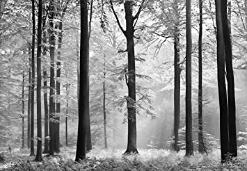 Fototapete schwarz weiß wald  Fototapete - WALD - (115i) Größe 366x254 cm 8-teilig schwarz-weiß ...