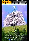 きぼうの桜の物語り (ワンアース)