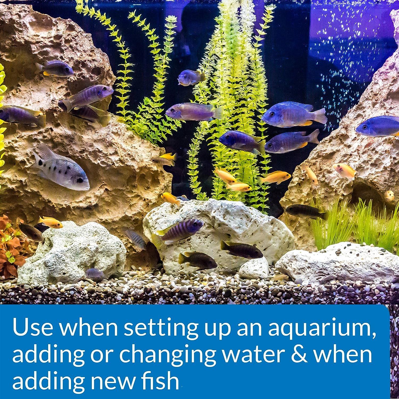 API Inicio rápido Acuario Agua Dulce y Agua salada Nitrifying Bacteria acondicionado: Amazon.es: Productos para mascotas