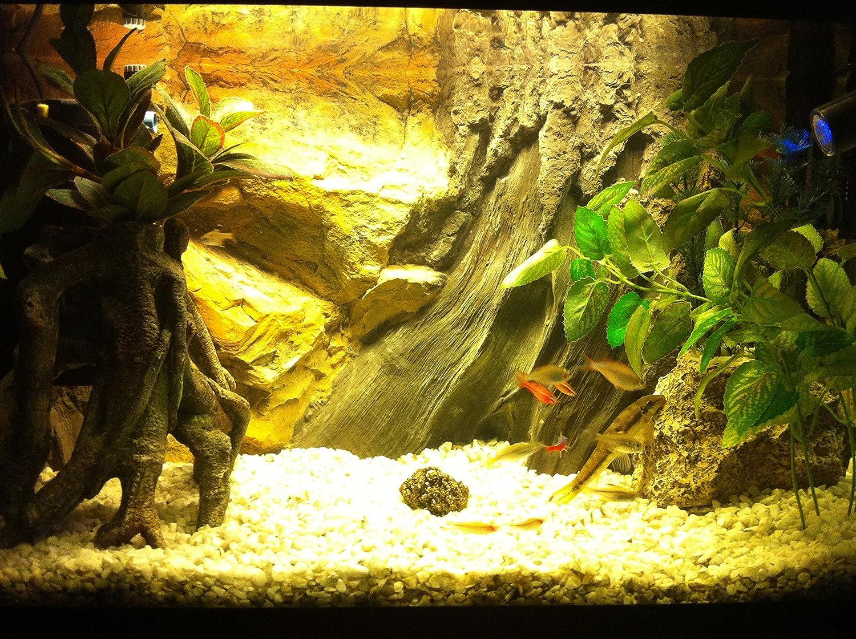 Aqua Maniac - Fondo de base para acuario 3D, polirresina (no espuma), 4 - 8 cm de grosor, decoración acuática única: Amazon.es: Productos para mascotas