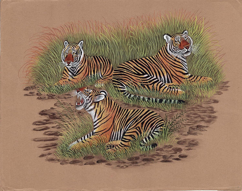 Indian Tiger Canvas Print 20*30 Inch HUGE !