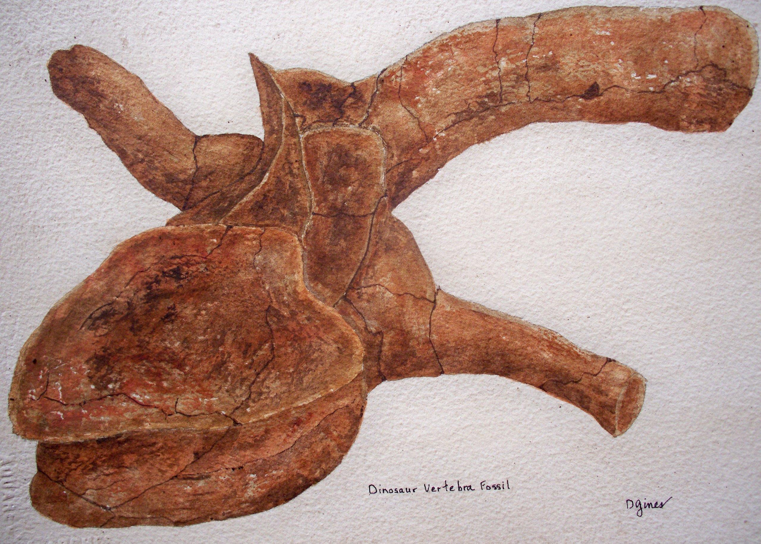 Dinosaur Vertebra Fossil by