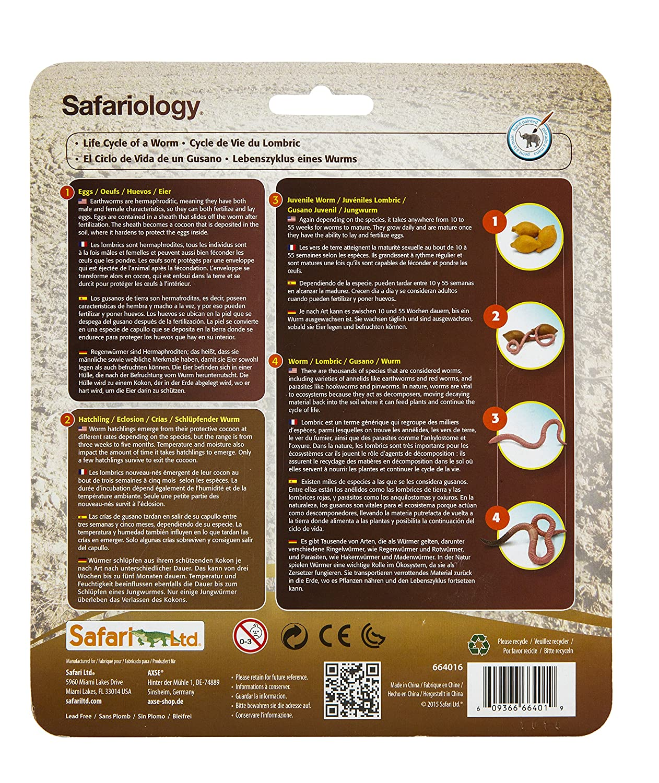 Amazon.de:Safari Lebenszyklus Eines Wurms