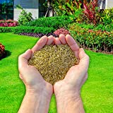 Fast Growing Premium Bio Treated Grass Seed - 1 kg - Covers 35 sqm (380 sq ft) (PRO 60) by Northern Plants