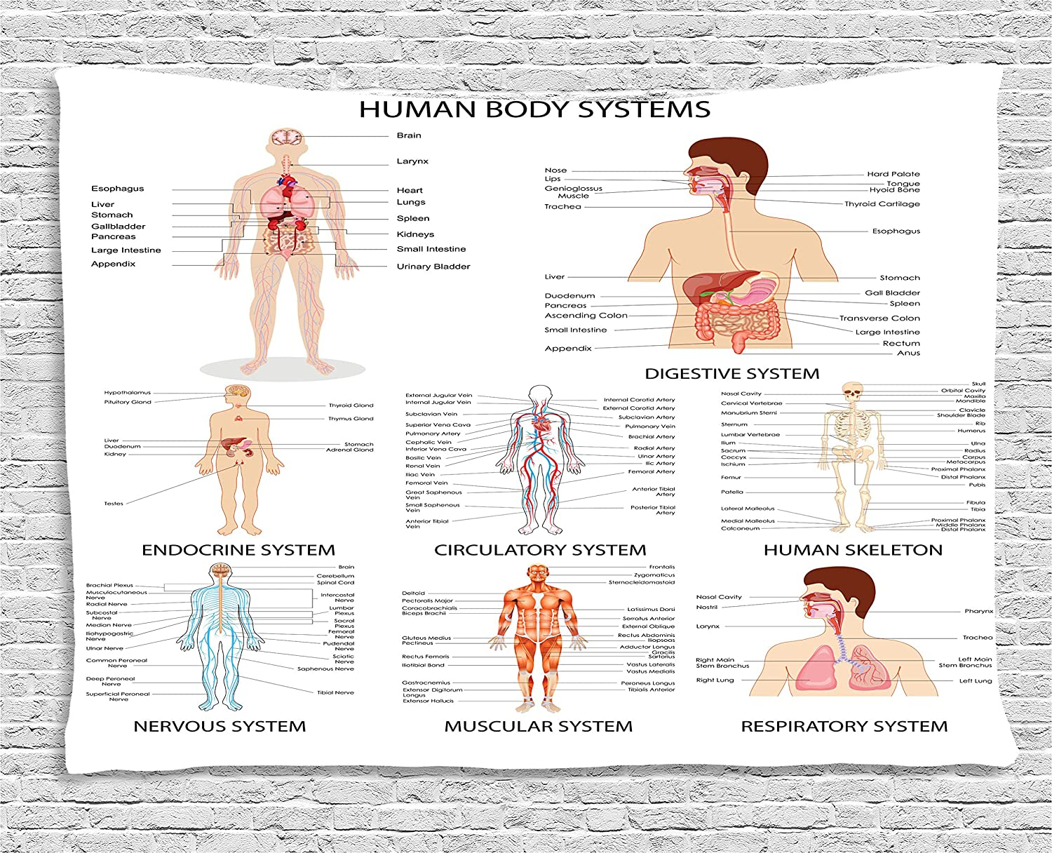 Amazon Ambesonne Human Anatomy Tapestry Complete Chart Of