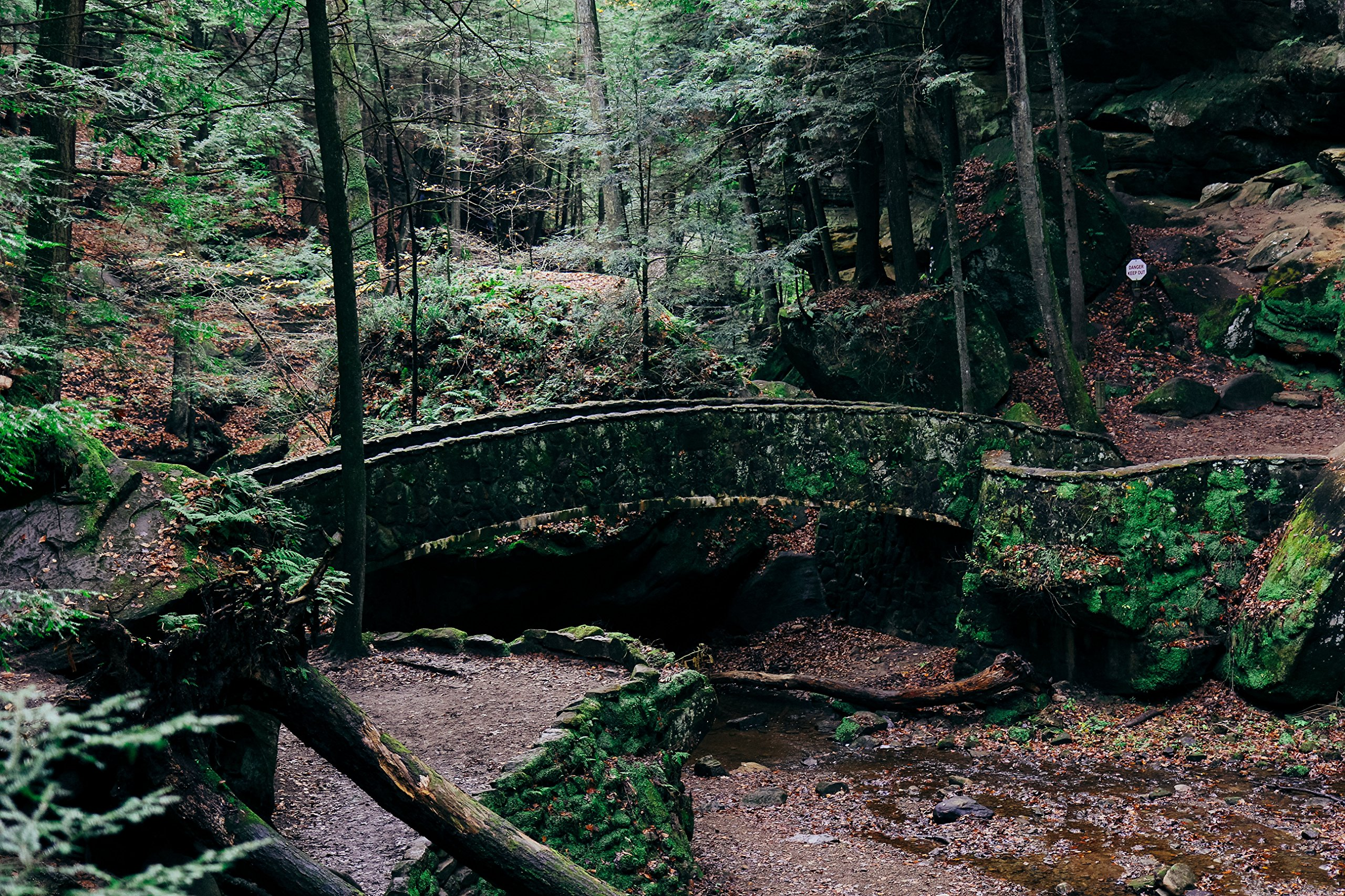 Forest Bridge by