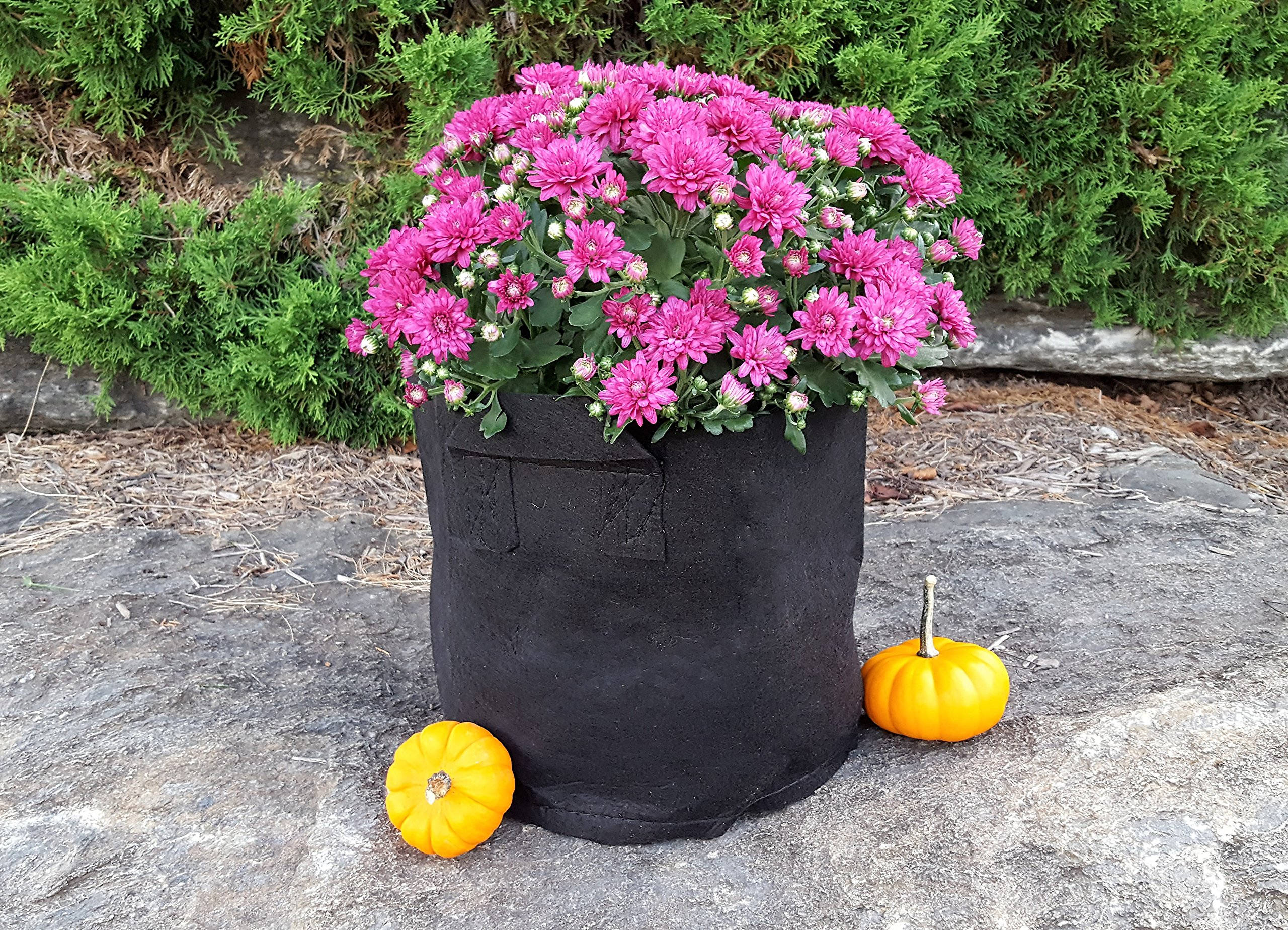 Grow Bags 5 Gallon Fabric Plant Pots with Handles, 10 Pack, by Bootstrap Farmer by Bootstrap Farmer