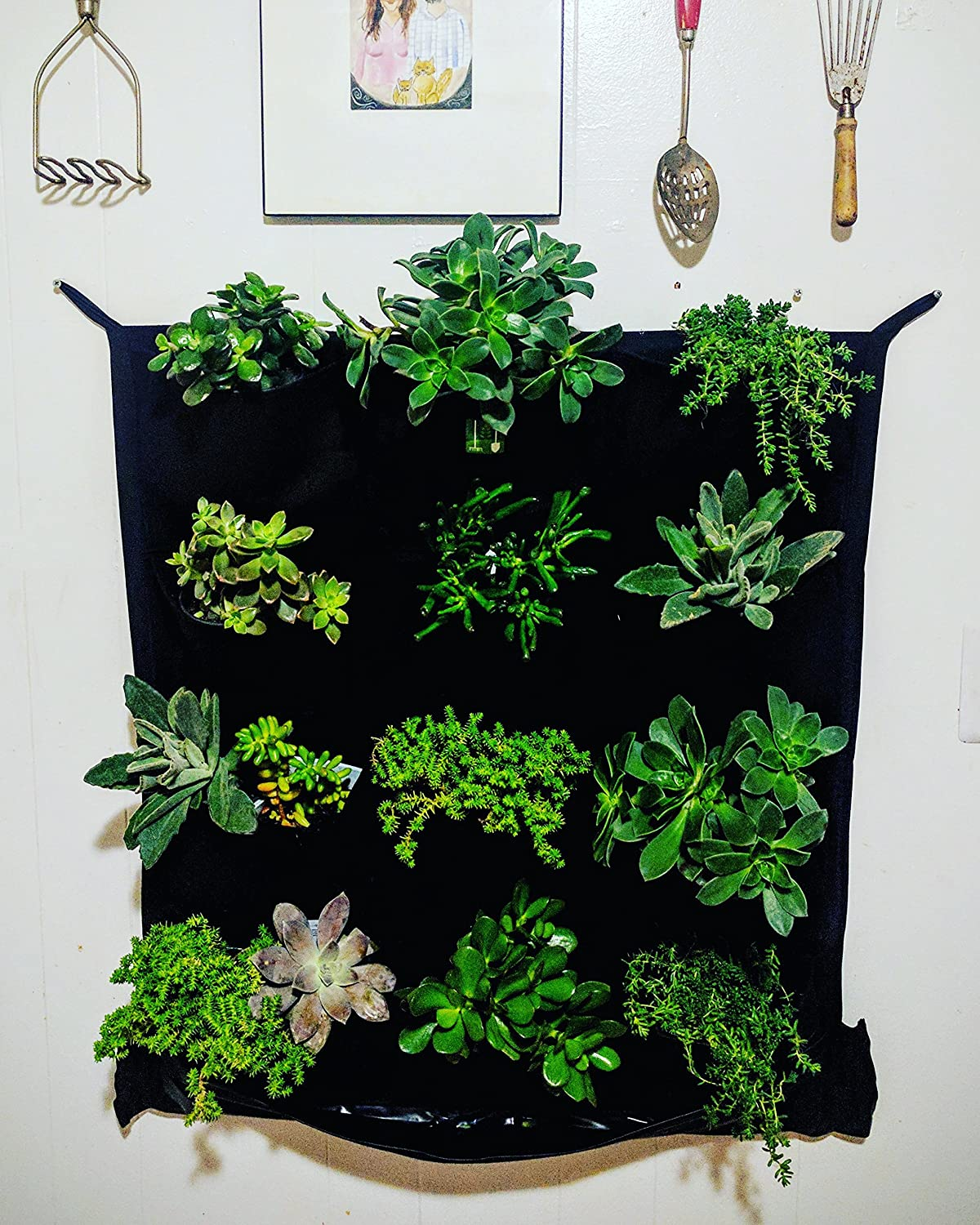 Exceptional Amazon.com: INDOOR Waterproof 12 Pocket Vertical Living Green Wall Planter:  Garden U0026 Outdoor
