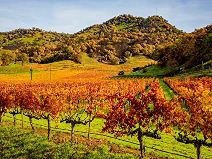 Amazon com: Fall Color in Napa Valley Wine Country 2017