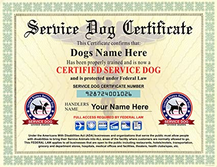 buy service dog certificate - we customize it with dogs and handlers ...