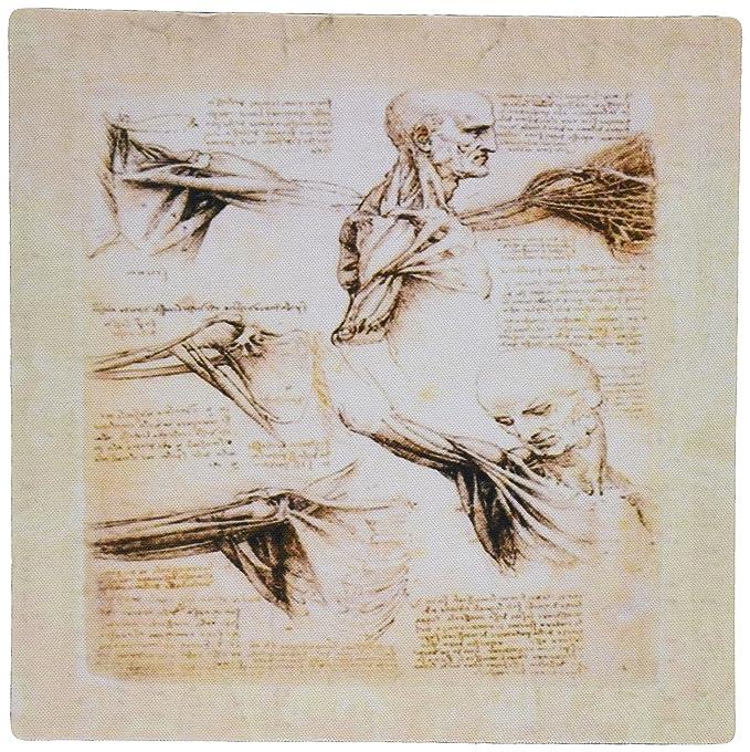Amazon 3drose Print Of Leonardo Da Vinci Anatomy Sketch Mouse