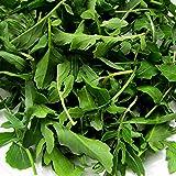 Arugula Seeds ► Organic Non-GMO Heirloom Arugula (Roquette or Rocket) Seeds (100+ Seeds)