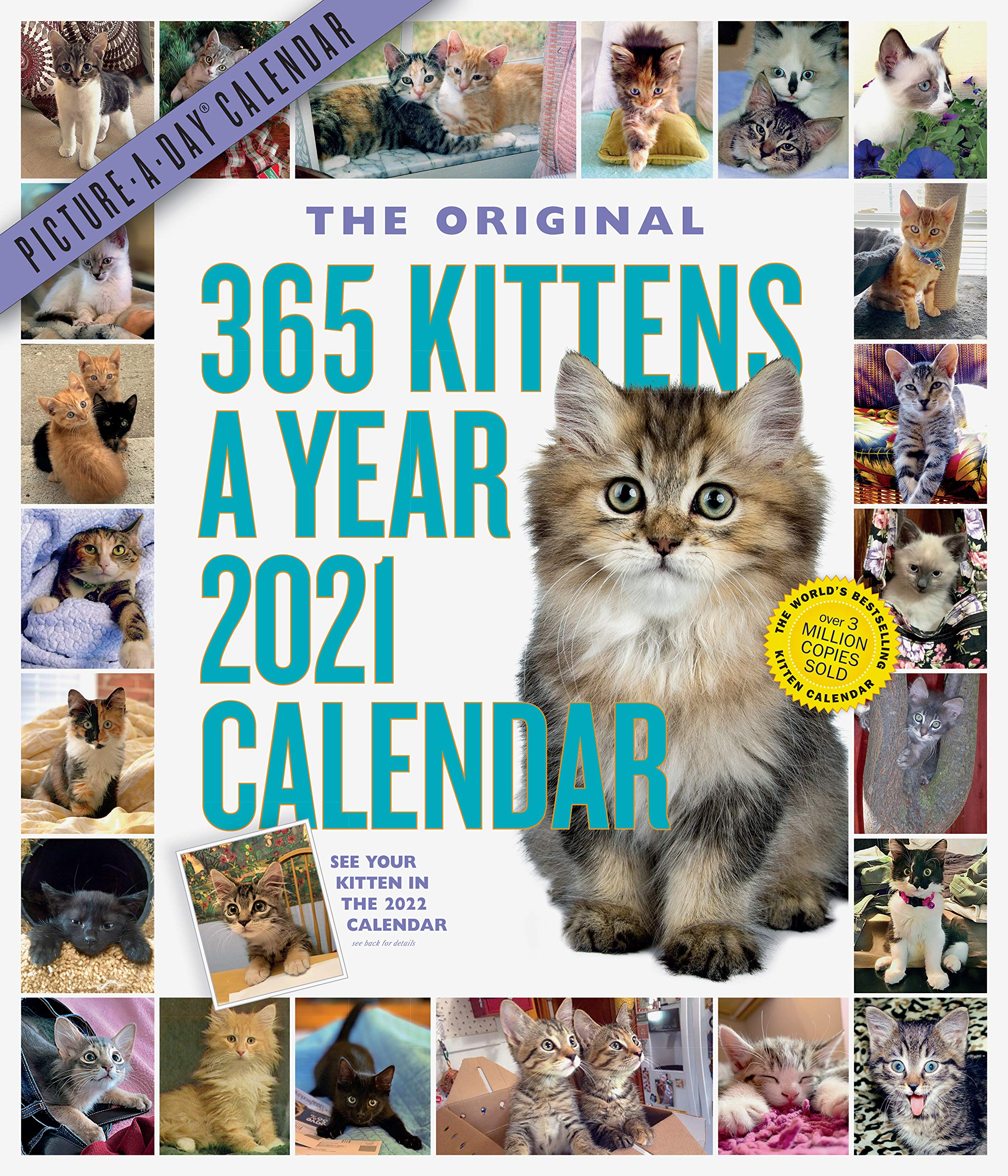 365 Kittens A Year Picture A Day Wall Calendar 2021: Workman
