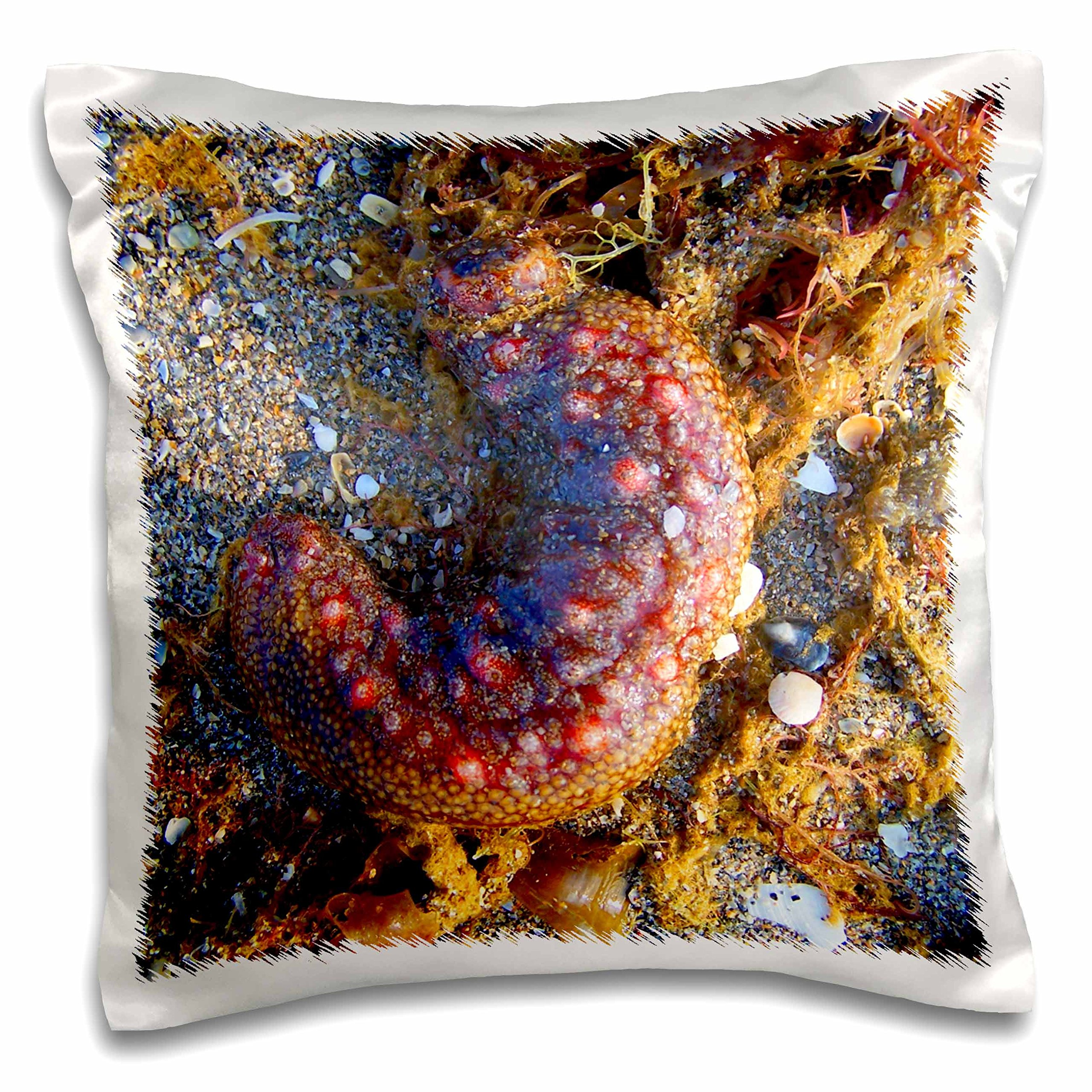 3dRose Sea Cucumber Red Animal Pillow Case, 16 x 16''