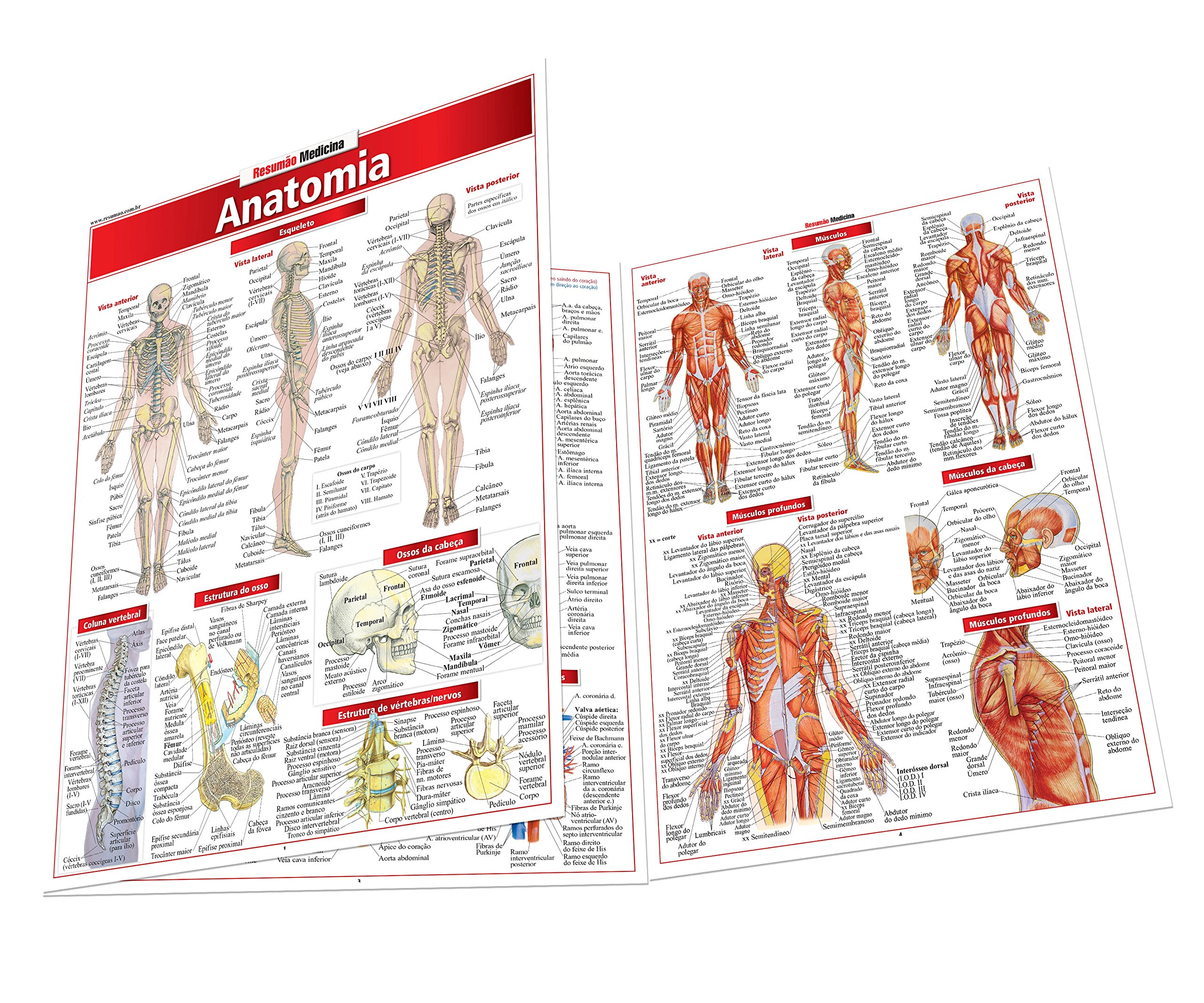 Anatomia: Vincent Perez: 9788588749245: Amazon.com: Books