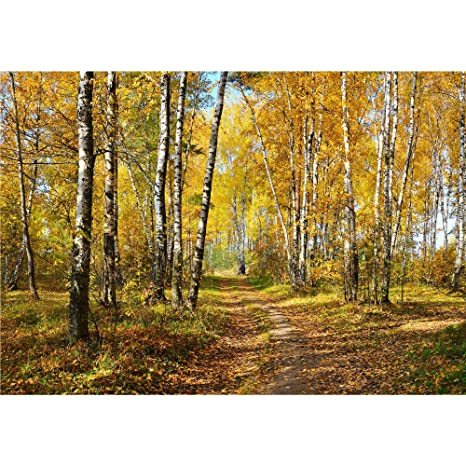 Huge 3D Panoramic Forest In Fall Window View Wall Stickers Mural 361
