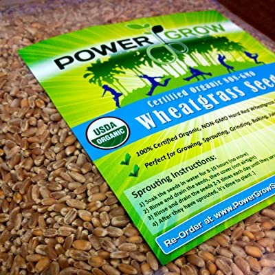 PowerGrow Systems Certified Organic Non-GMO Wheatgrass Seeds - 1 LB Wheat Seed - Guaranteed to Grow : Garden & Outdoor