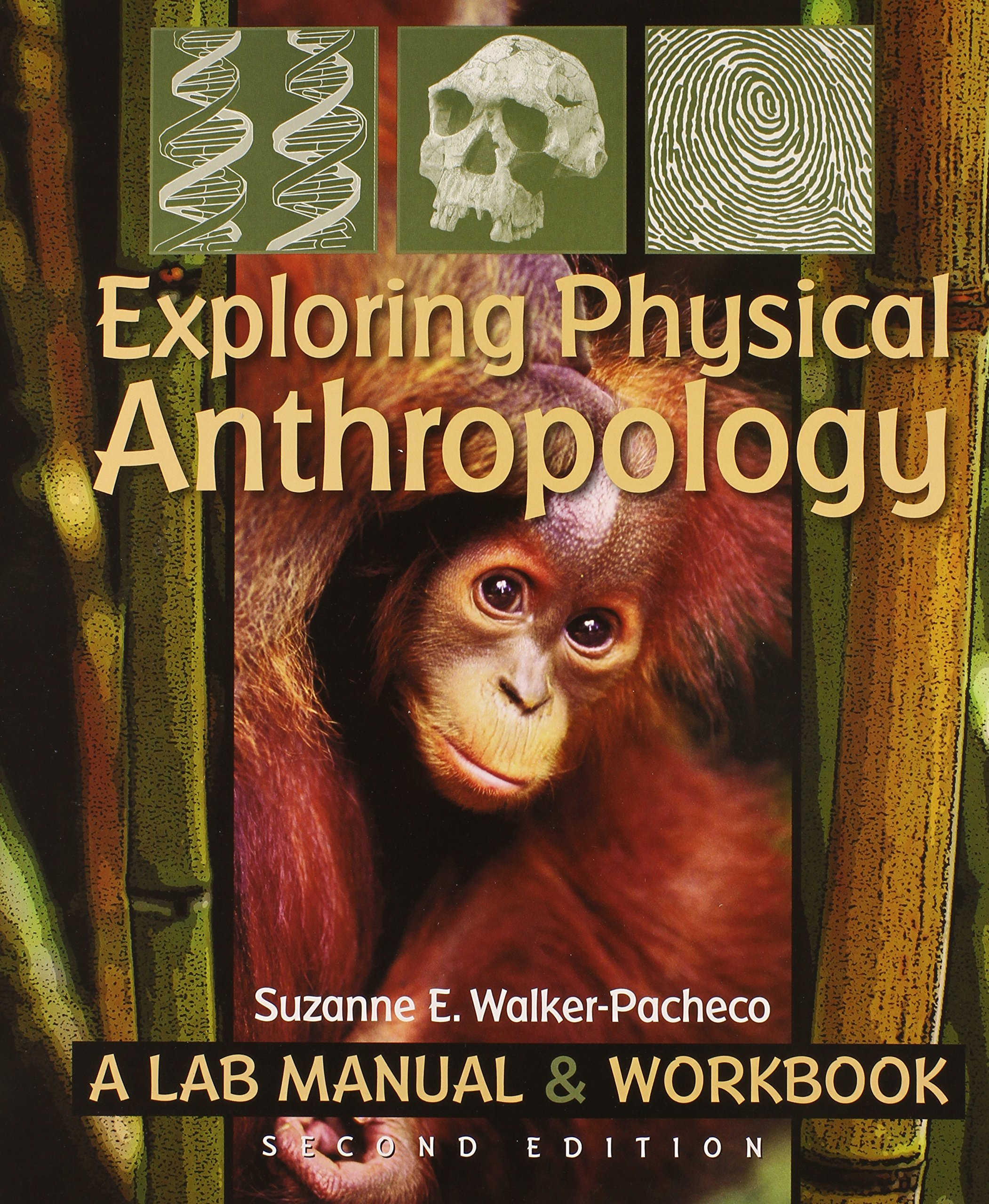 Exploring Physical Anthropology: A Lab Manual and Workbook: Amazon.co.uk:  Suzanne E. Walker-Pacheco: 9780895828118: Books