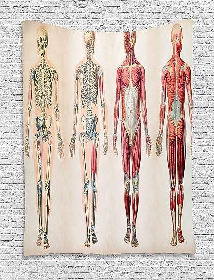 Amazon Com Ambesonne Human Anatomy Tapestry Vintage Chart Of Body