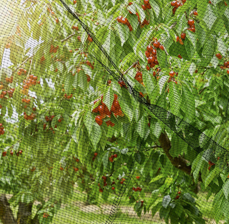 Windhager Vogelschutznetz Vogelabwehrnetz Baumnetz Ortonet sch/ützt Obstb/äume vor Vogelfra/ß schwarz 06014 Maschenweite 13 x 13 mm Gr/ö/ße 10 x 4 m