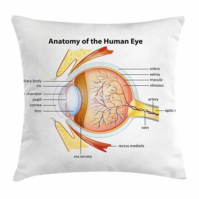 Amazon Ambesonne Educational Throw Pillow Cushion Cover Human