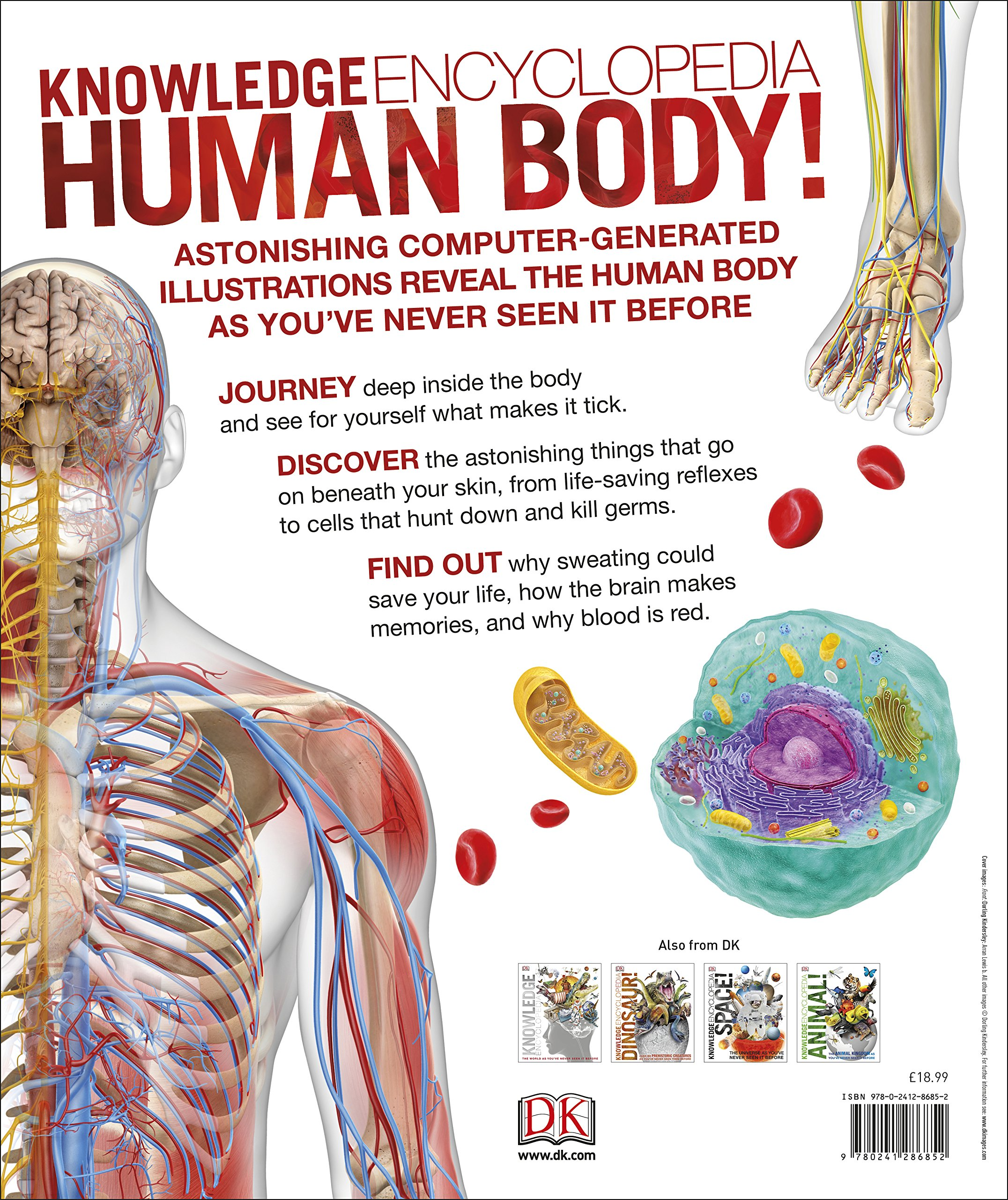 Buy Knowledge Encyclopedia Human Body Book Online At Low Prices In