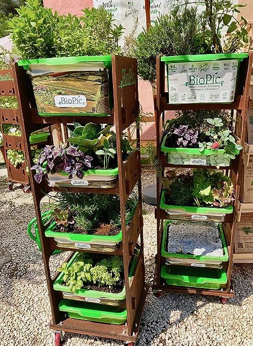 BioPic L\'ORTO DA TERRAZZO DOLCEVITA: Amazon.it: Giardino e giardinaggio