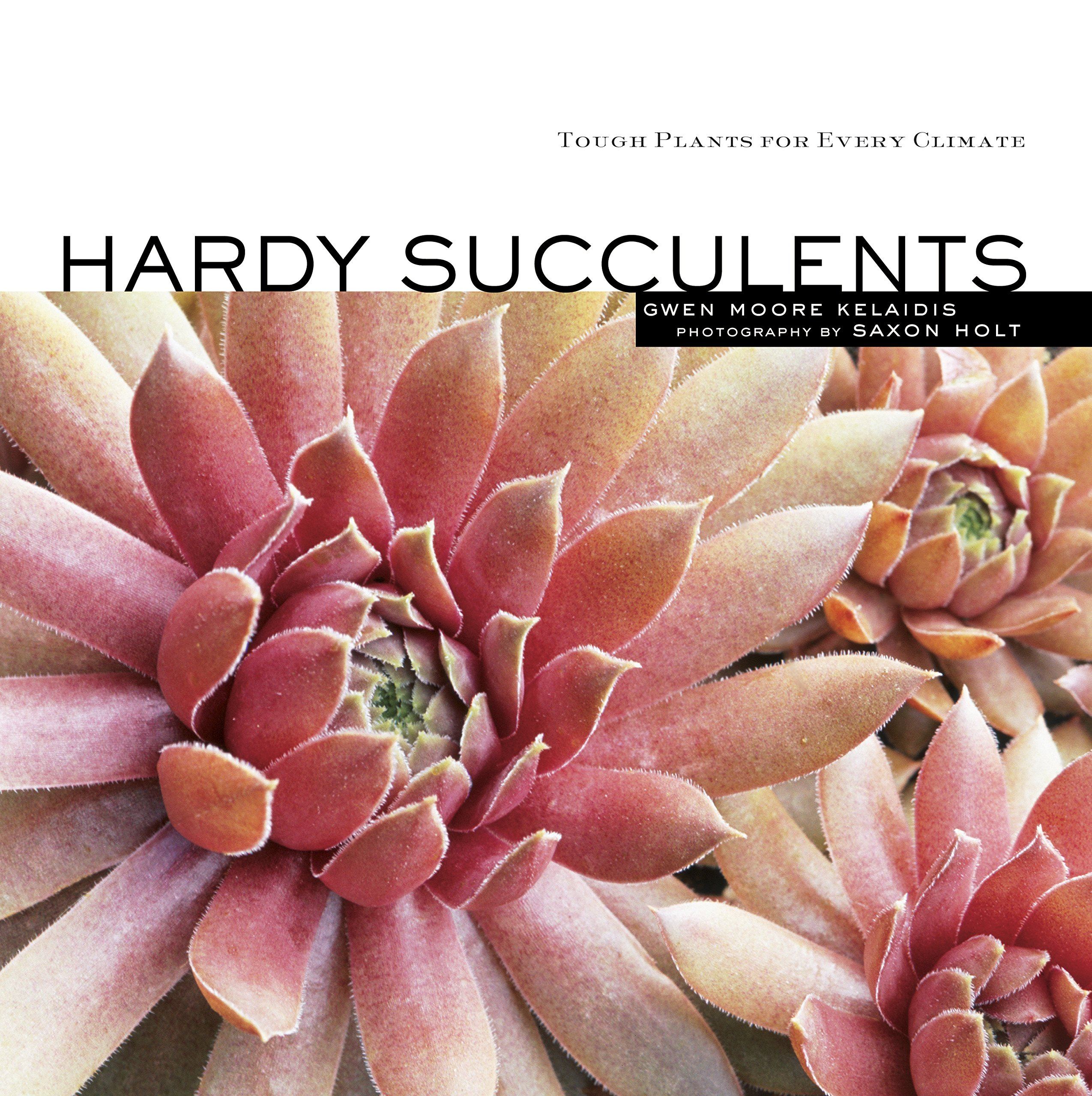 hardy succulents tough plants for every climate gwen moore