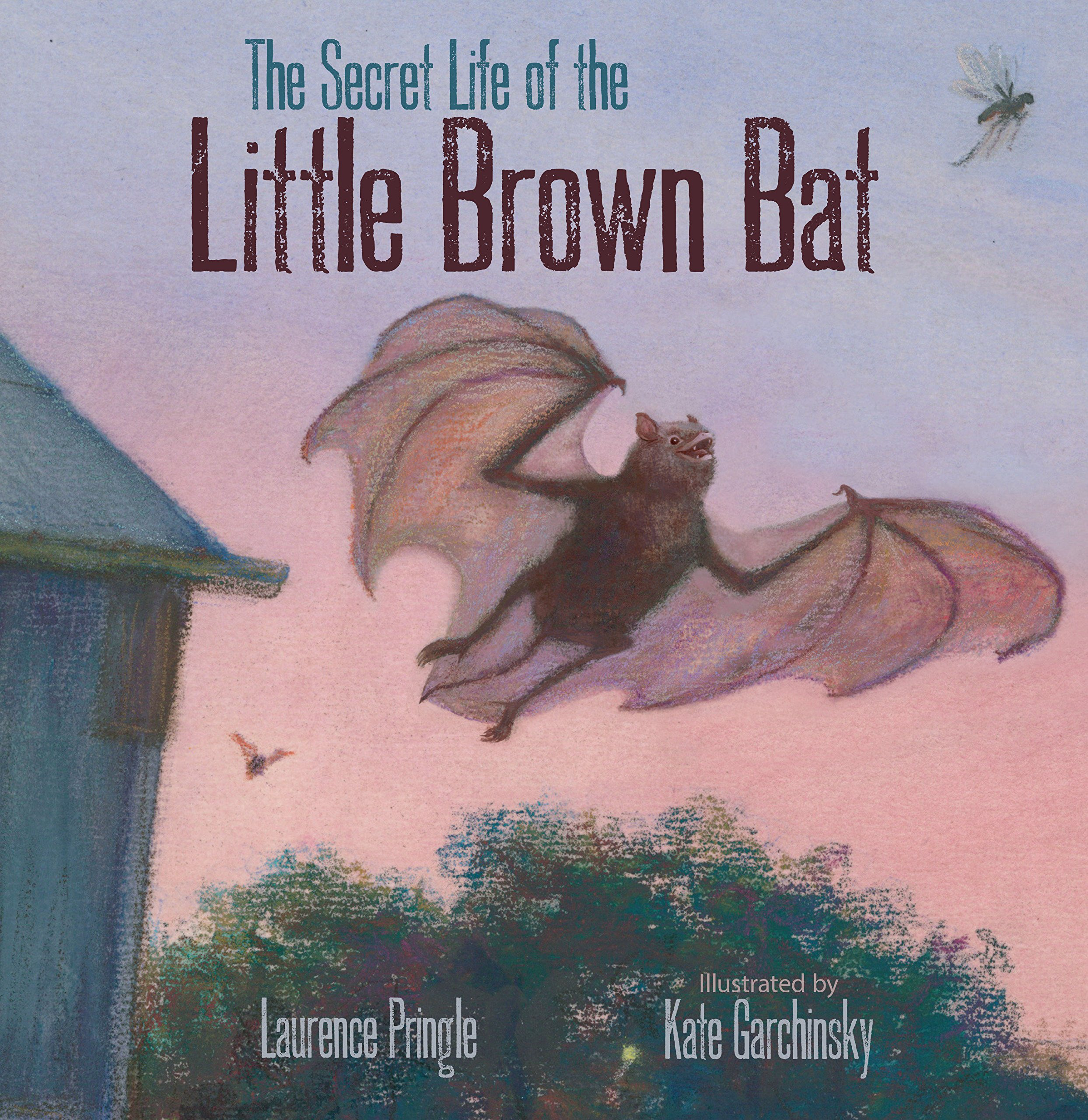 Image result for secret life little brown bat amazon