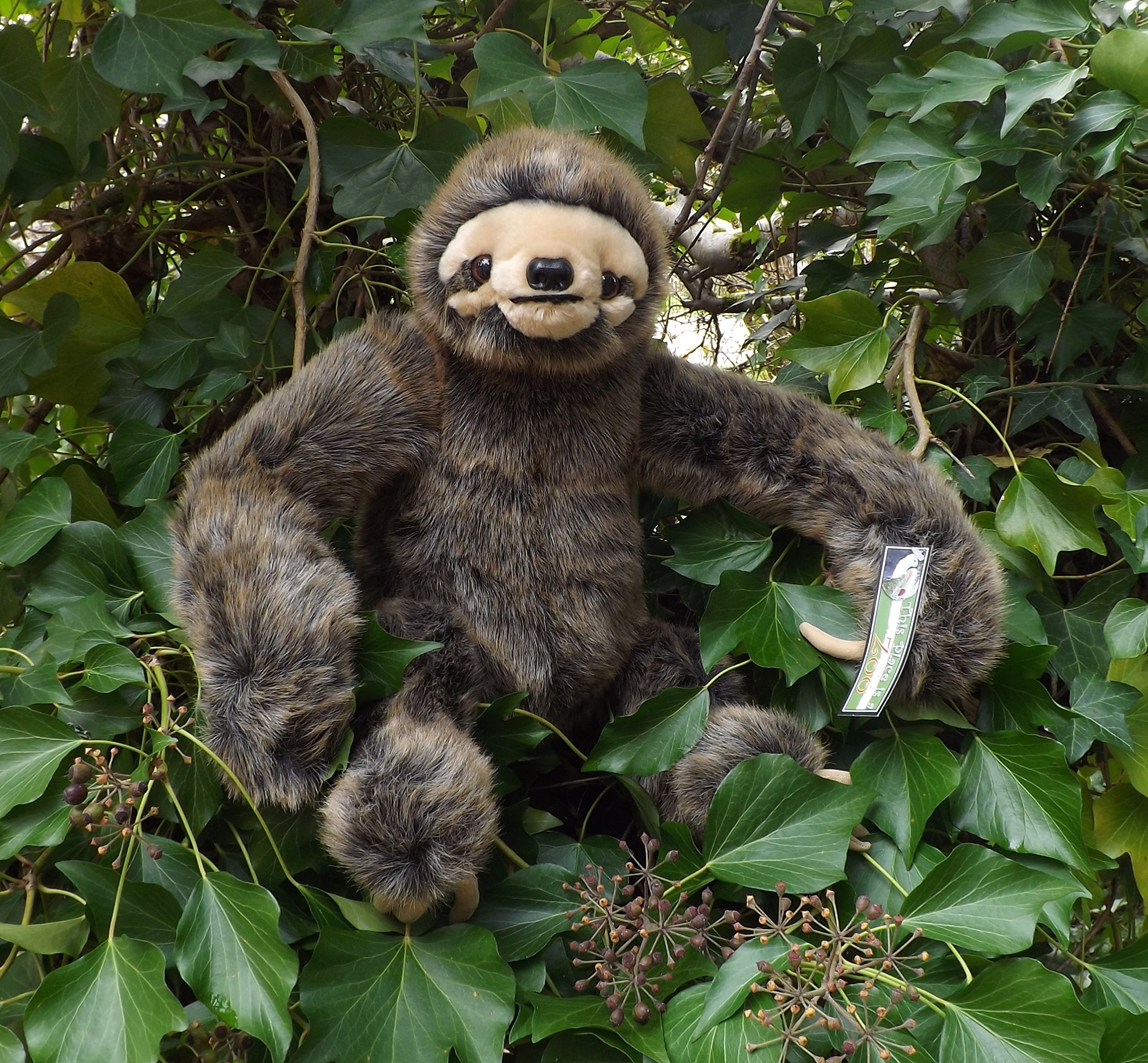 Large Stuffed Sloth - 24'' Realistic Stuffed Animal Sloth by This Place is a Zoo