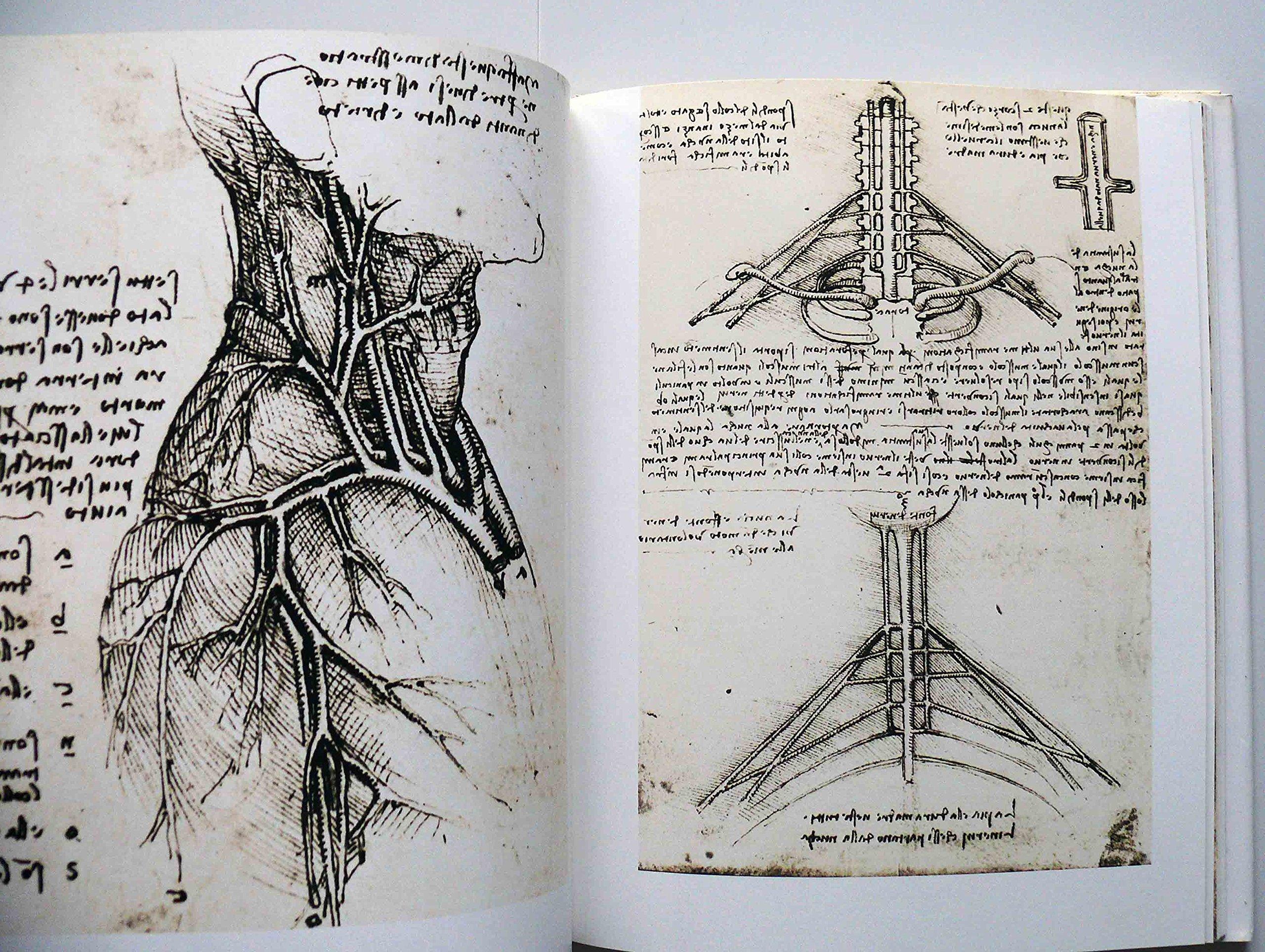 Leonardo da Vinci. Anatomische Zeichnungen: Amazon.de: Jean Mathe ...