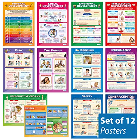 Amazon.com: Desarrollo del niño (Set Completo de 12 ...