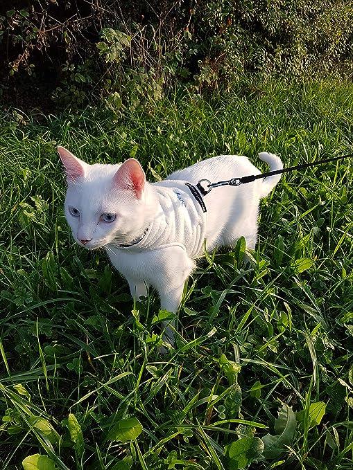 Mynwood - Chaqueta para Gato o arnés de Forro Polar para Gatos hasta 8 Meses,
