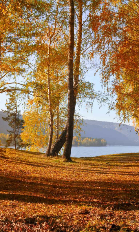 Amazon Autumn Wallpaper Appstore For Android