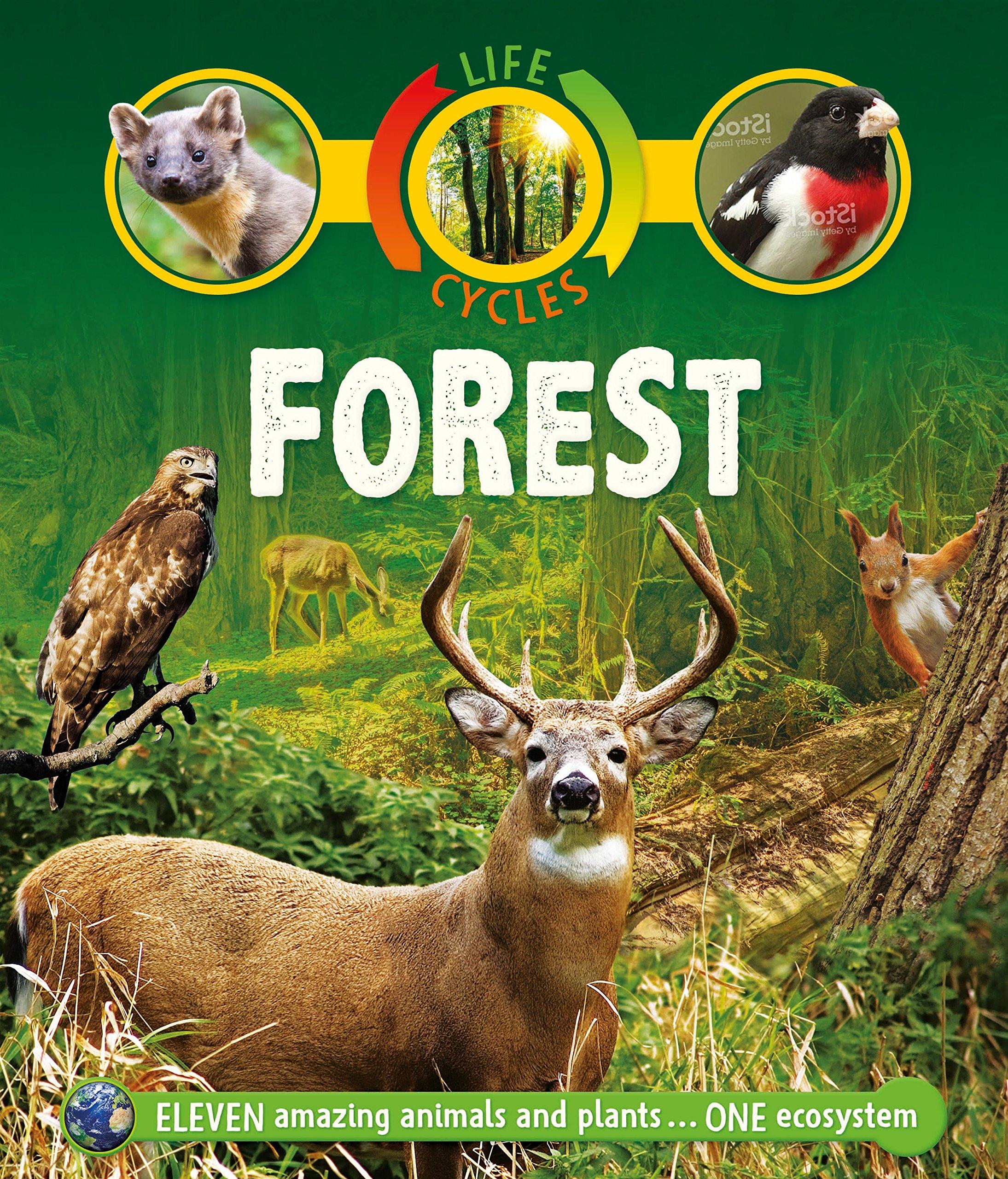 Life Cycles: Forest pdf epub